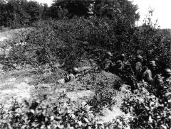 Armata Romana in Primul Razboi Mondial (89)